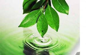 экология.листики